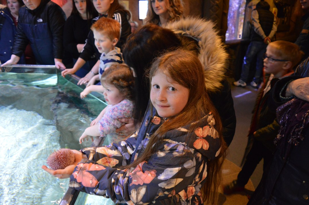 Touch tanks at Exploris Aquarium in Portaferry