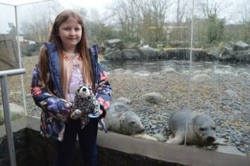 Spotty the seal meets his friends at Exploris Aquarium in Portaferry