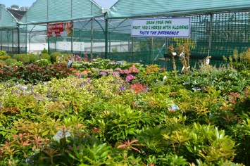 Shrubs and Plants at Alcorn's Tropical World in Donegal