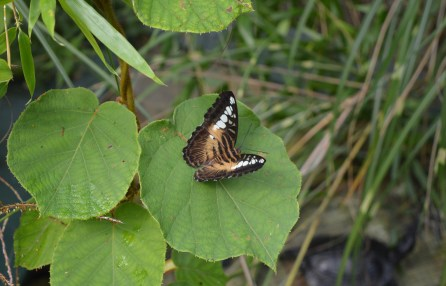 A butterfly inside the Tropical Butterfly Forest at Alcorn's Tropical World in Donegal