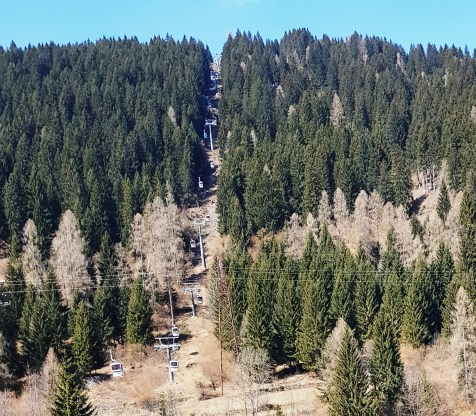 A cable soars between a clearing of pine trees at Ski Center Latemar