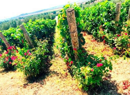 Petra Winery in San Lorenzo, Tuscany