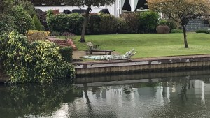 A crocodile sculpture on the bank of the River Thames