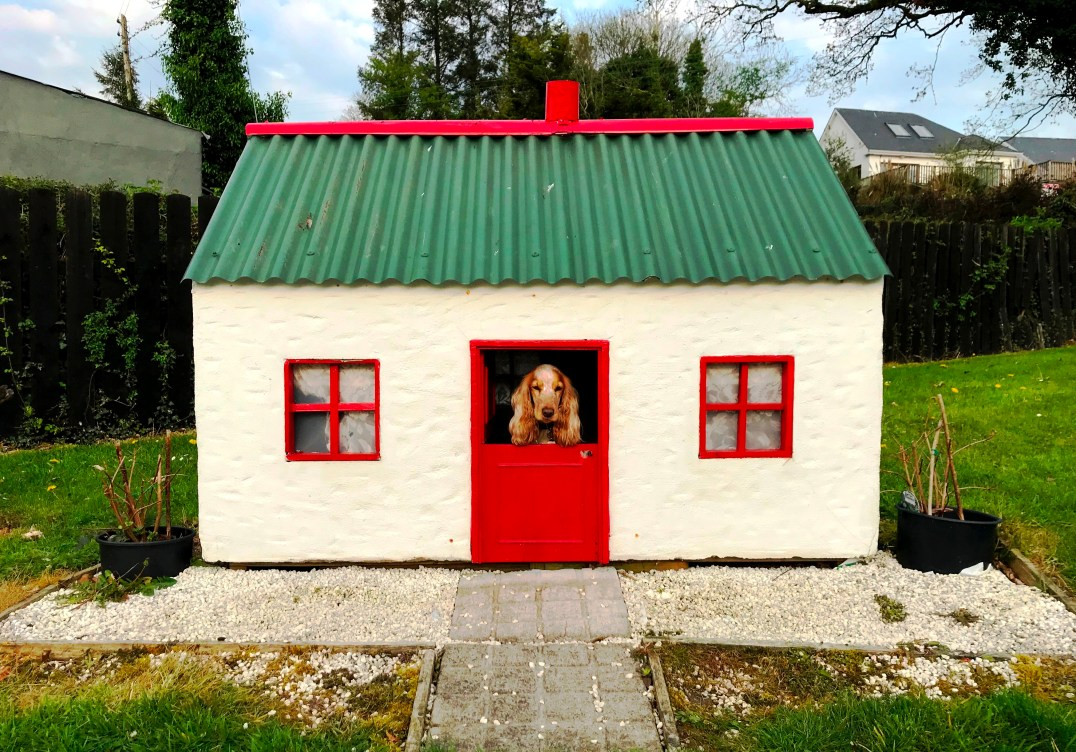 Luxury Kennels for Rosie the Cocker Spaniel