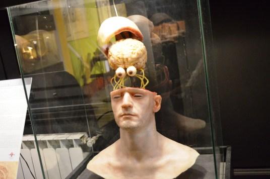 Study of the Brain at the Leonardo da Vinci Museum, Florence