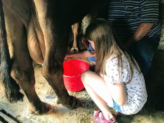 Lily-Belle milking cows at Malga Pampeago, Italy
