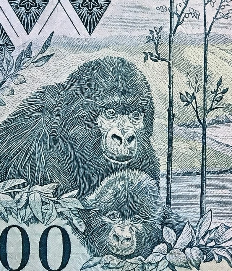 closeup detail of Rwanda 100 Francs Banknote, Year 1989 back, featuring gorillas