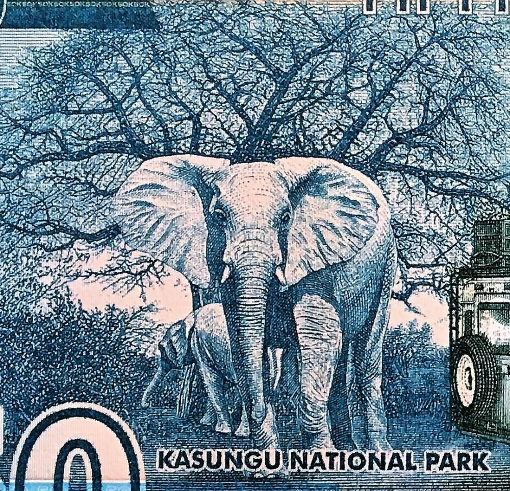 closeup detail of Malawi 50 Kwacha Banknote back, featuring 2 elephants