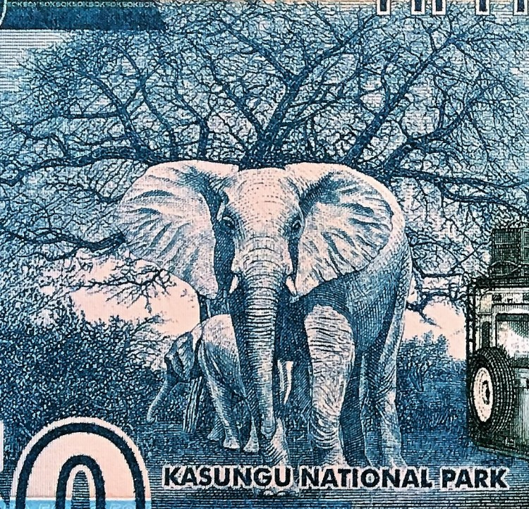 closeup detail of Malawi 50 Kwacha Banknote back, featuring 2 elephants