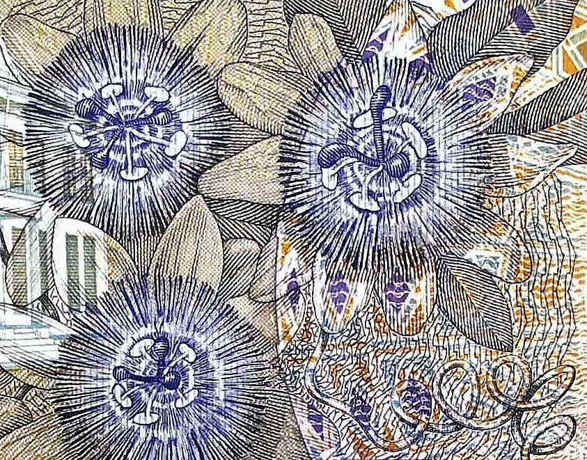 closeup detail from Suriname 5 Guden Banknote, Year 2000 back, featuring passionflowers passiflora blooms