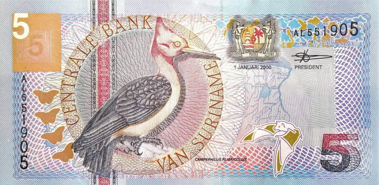 Suriname 5 Guden Banknote, Year 2000 front, featuring red necked woodpecker bird