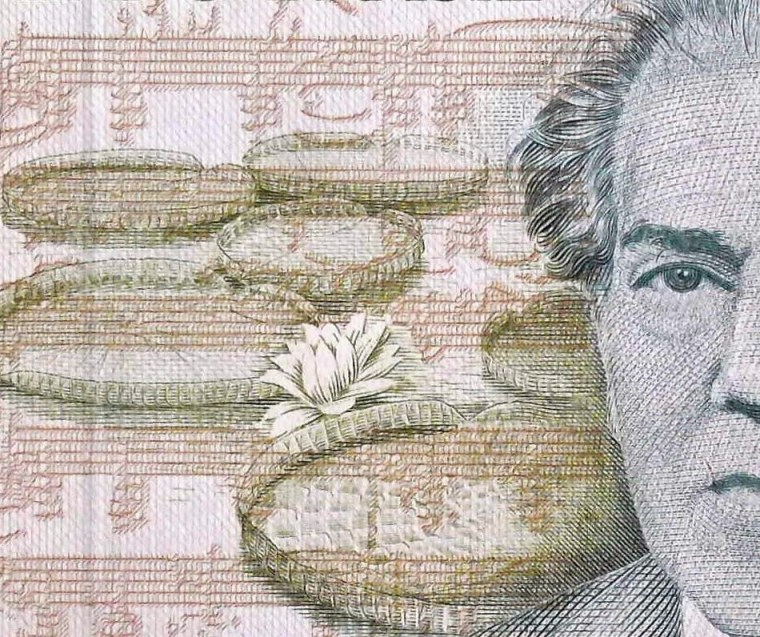 closeup detail of Brazil 500 Cruzados Banknote front, featuring lily pads and musical score