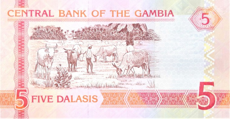 Gambia 5 Dalasi banknote back (2) featuring cattle and herdsman