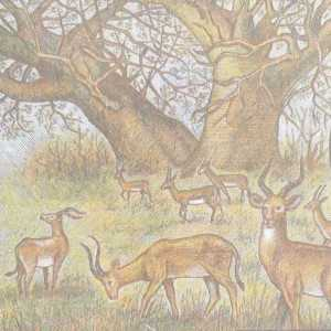 Gabon 500 Franc 2000 banknote back (2), featuring gazzelles grazing beneath a baobab tree