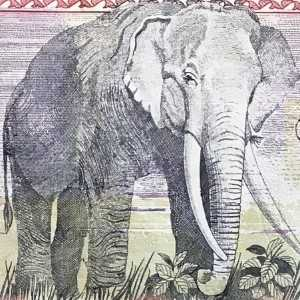 Nepal 1000 Rupee 2013 banknote back (2), featuring elephant