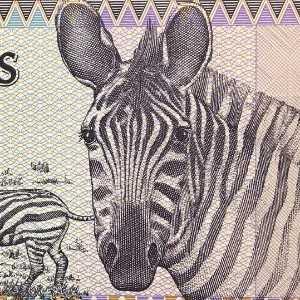 Rwanda 100 Franc 1989 banknote front (2), featuring zebras