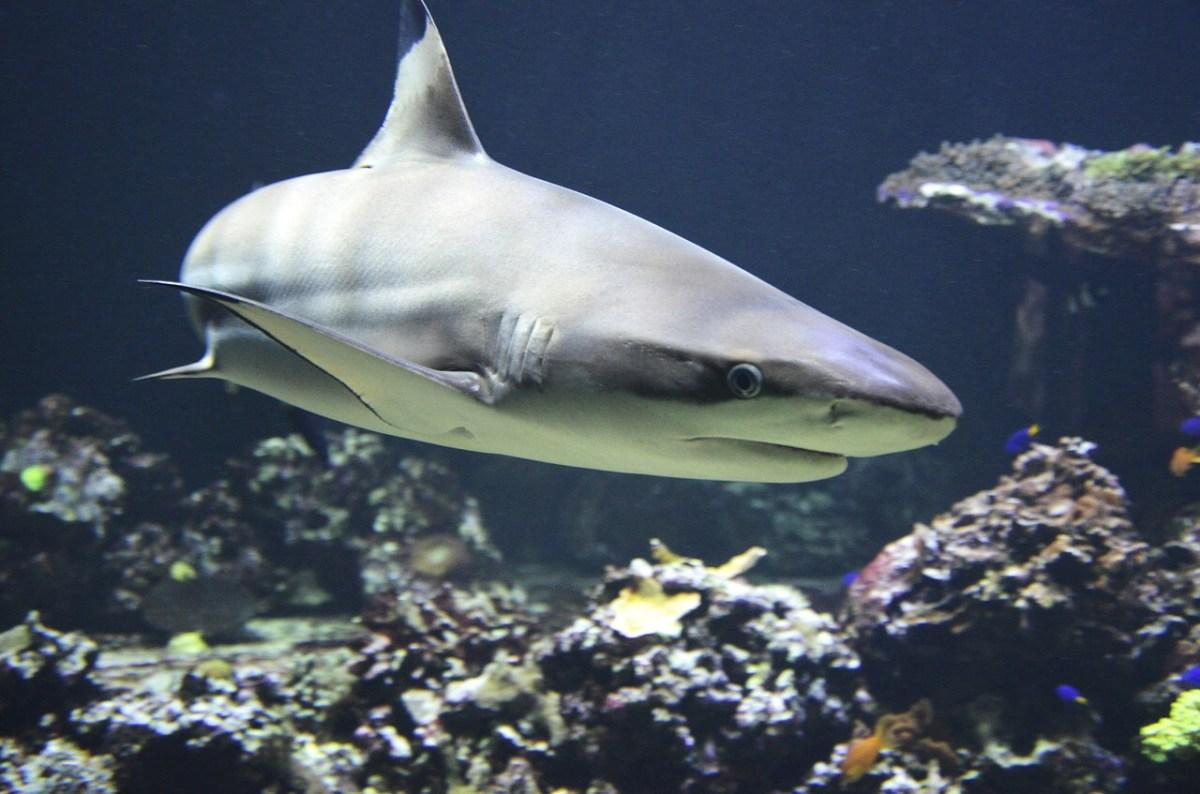 Scuba shark fear