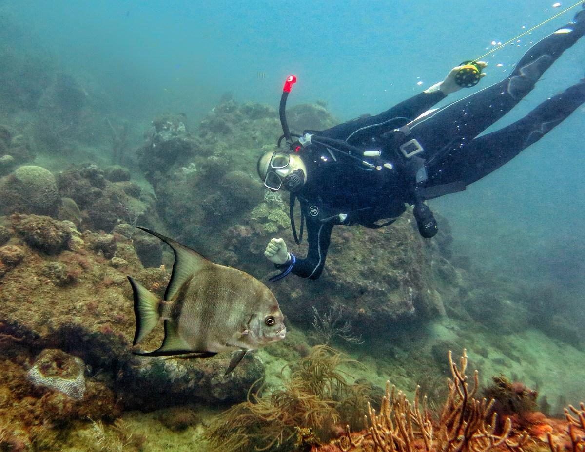 Diving Tayrona park