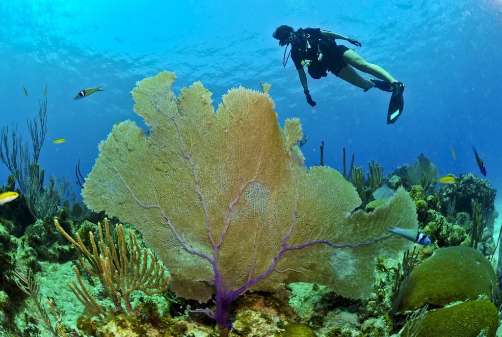 eco friendly diver
