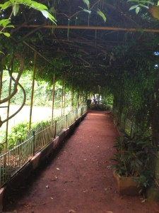 A vine covered tunnel in the hanging garden