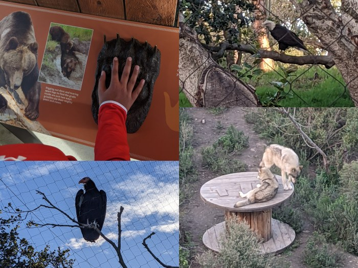 Animals from the California Trail at the Oakland Zoo