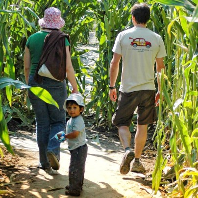 A young boy looking at the camera in a corn maze, with a young woman and man walking ahead