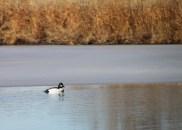 img_0514-duck