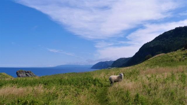 Green Gardens Terre-Neuve Canada voyage road-trip blog Arpenter le chemin