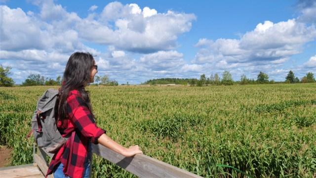 labyrinthe mais activites automne canada ete indien voyage road-trip arpenter le chemin