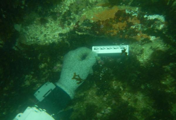 Inician el proyecto de investigación arqueológica subacuática en las islas de Pachacamac