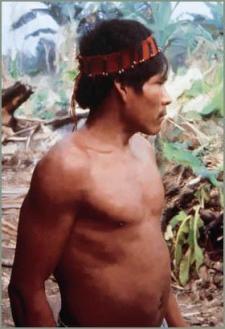 amahuaca-indigena