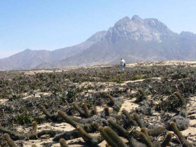 Una caminata natural al Cerro Campana en Trujillo