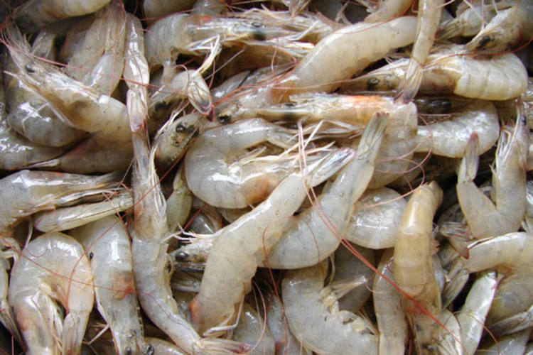 Há cerca de oito anos, o camarão produzido no Rio Grande do Norte abastecia basicamente a Europa. Hoje os principais compradores são os Estados do Sul e Sudeste