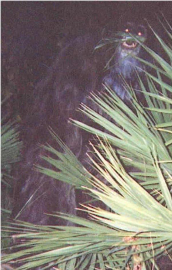 skunk-ape.jpg