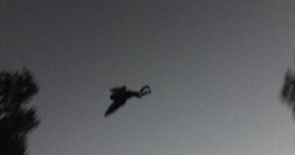 humanoide-voador