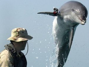 Dolphin-spy-U.S.-Navy-Getty-640x480