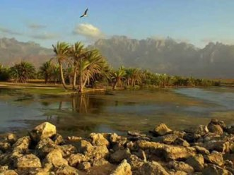 Pulau Socotra Yaman 1