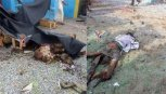 Saudi Bombardir Rumah Sakit Pasca Habisi Anak-anak di Sekolah Yaman