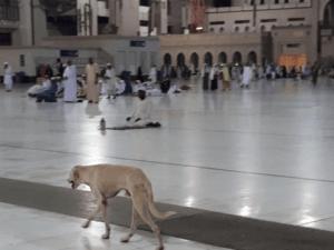 Seekor Anjing di Masjidil Haram, Mekkah