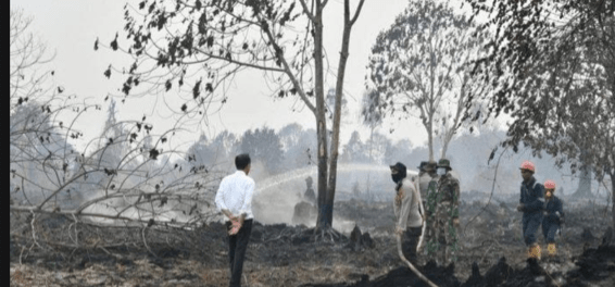 Jokowi pantau Karhutla
