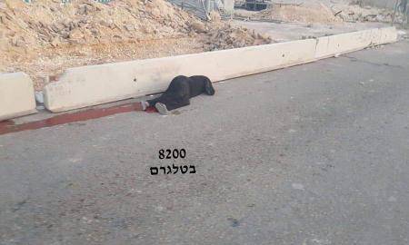 Tentara Israel Tembak Wanita Palestina dari Dekat