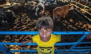 Warga Palestina Rayakan Idul Adha Ditengah Krisis Ekonomi dan Pandemi Corona