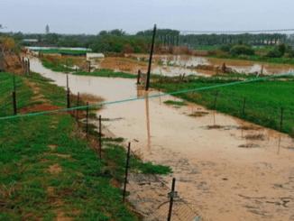 Israel Alirkan Banjir ke Palestina, Hancurkan Ladang Gandum
