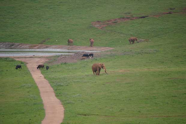 Elefantes en Cabarceno