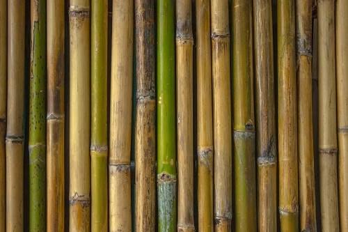 Decorare Il Bagno Con Il Bambù Idee Originali Arrediamo
