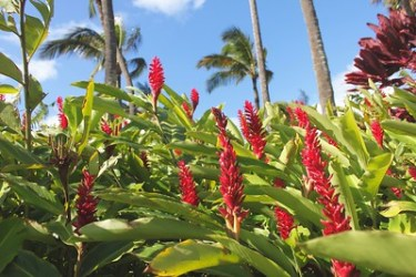 Photo Courtesy of Maui Tropical Plantation
