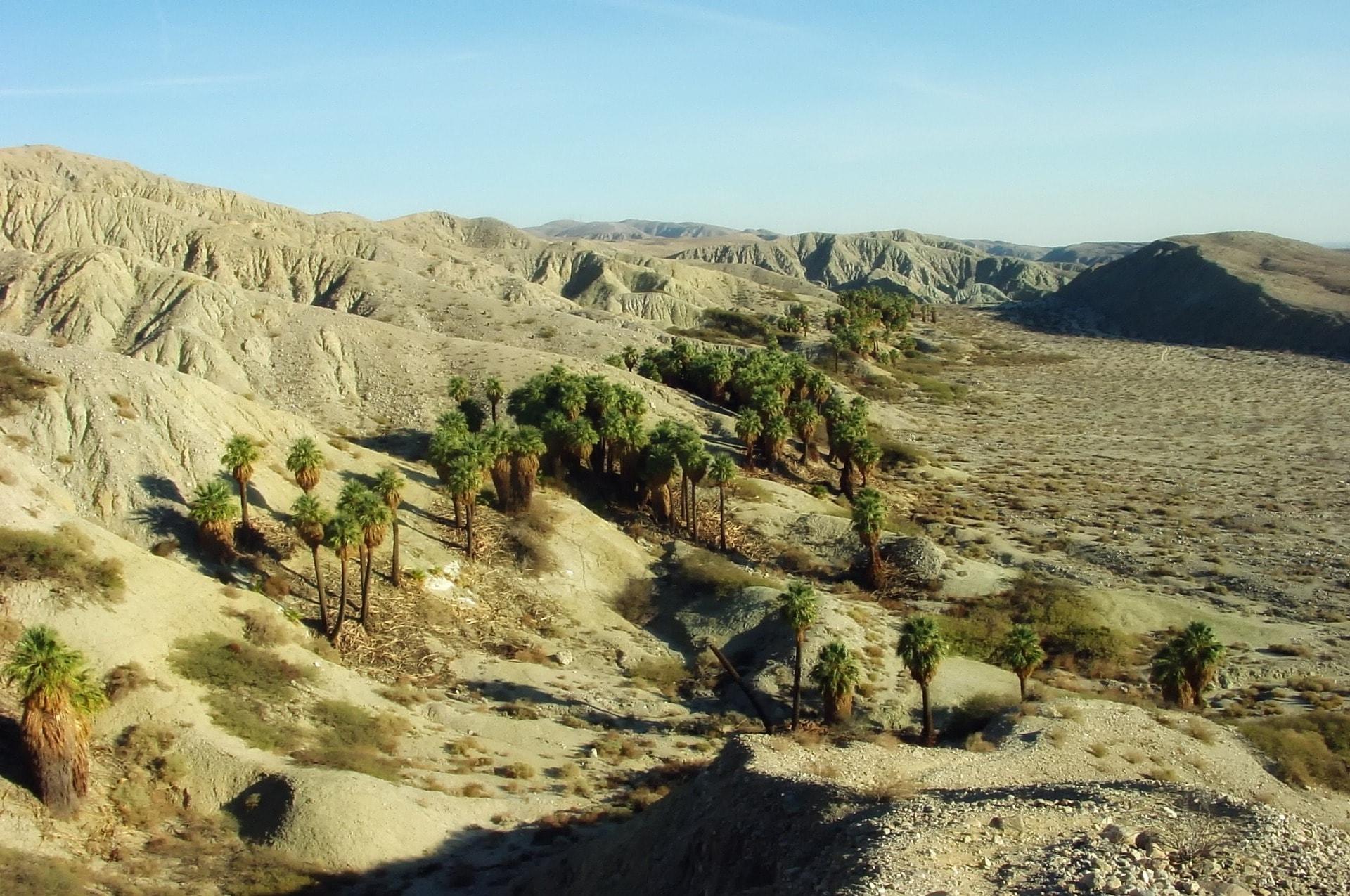 Explore The Coachella Valley Preserve S Unique Beauty