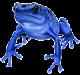 Arrowfrog