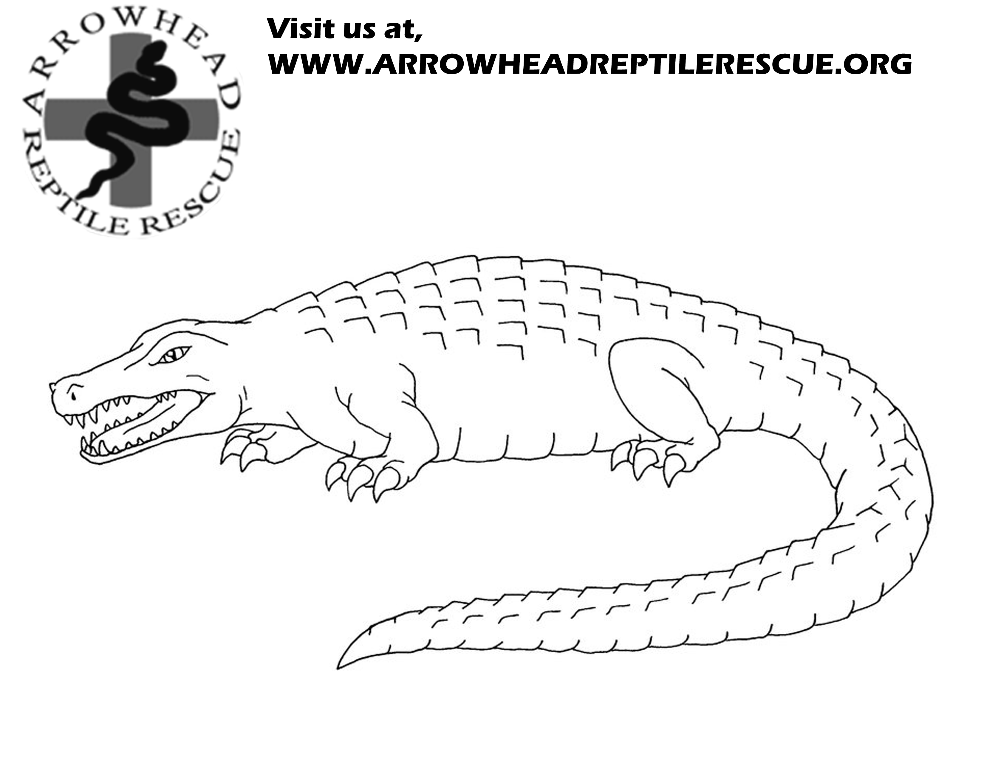 Alligator Snapping Turtle Sketches Sketch Coloring Page