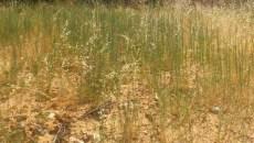 Desbroce y hierbas altas en Arroyomolinos